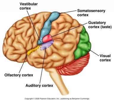 สมองไม่ได้เสื่อมตามอายุ